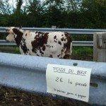 Trouver le poids du boeuf au comice agricole de Blangy le Château